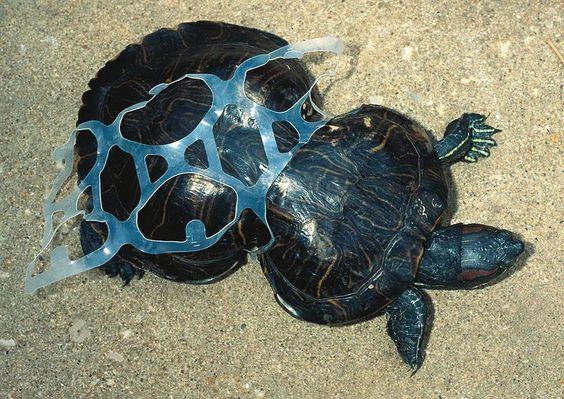 พลาสติกย่อยสลายได้ตามธรรมชาติคืออะไร พลาสติกย่อยสลายได้ตามธรรมชาติ