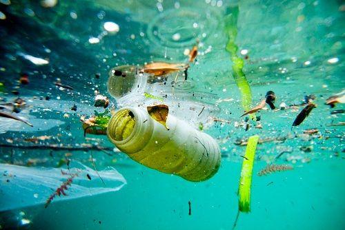 ทำไมสัตว์ทะเลถึงกินพลาสติก เคยสงสัยกันไหมคะ ทำไมสัตว์ทะเลกินขยะพลาสติก
